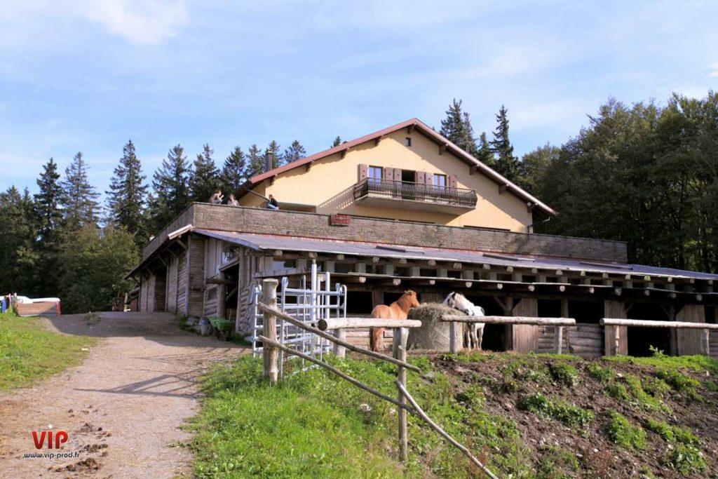 Cheval Alsace