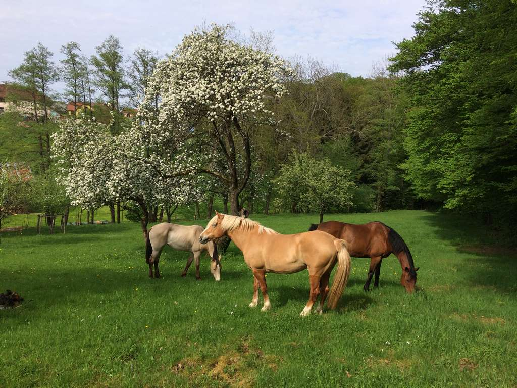 Ferme Equestre de Wintzenheim Kochersberg